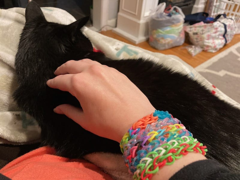A cat in a chair being pet by a woman with colorful bracelets on her arm.